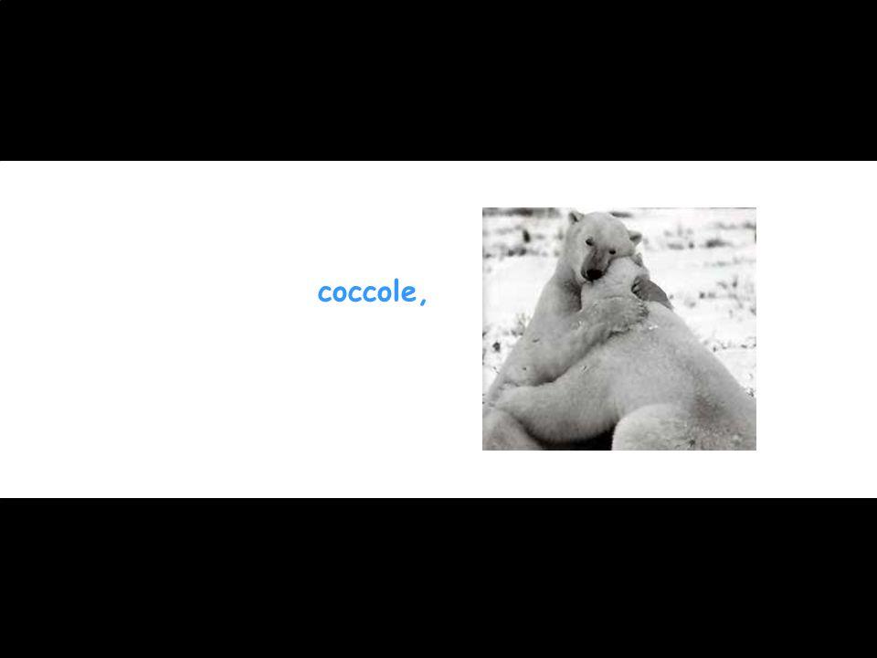 coccole,
