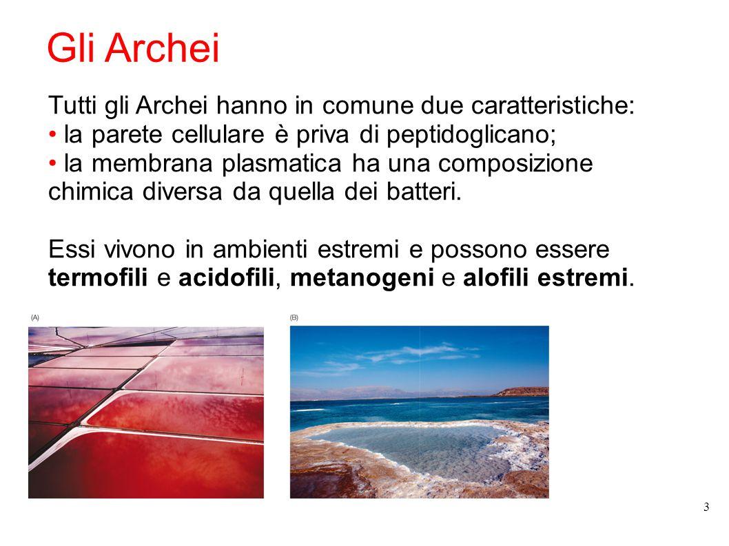 Gli Archei Tutti gli Archei hanno in comune due caratteristiche: