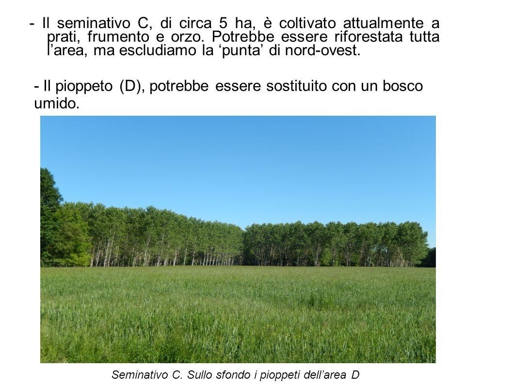 - Il pioppeto (D), potrebbe essere sostituito con un bosco umido.