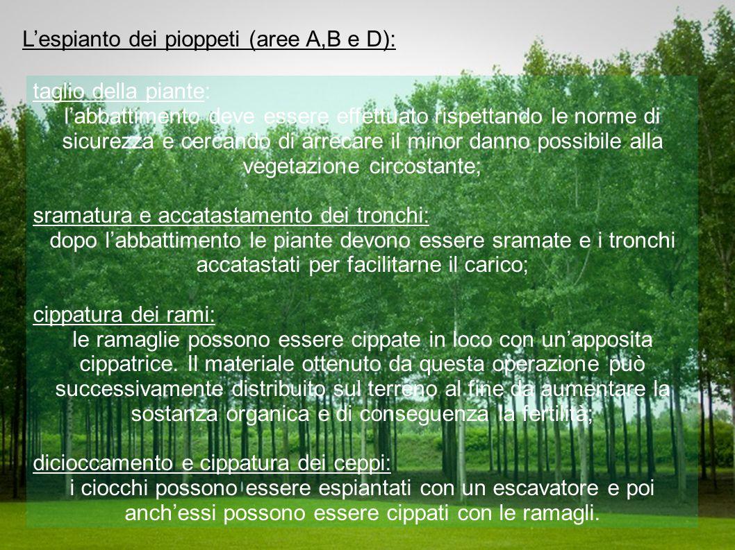 L'espianto dei pioppeti (aree A,B e D):
