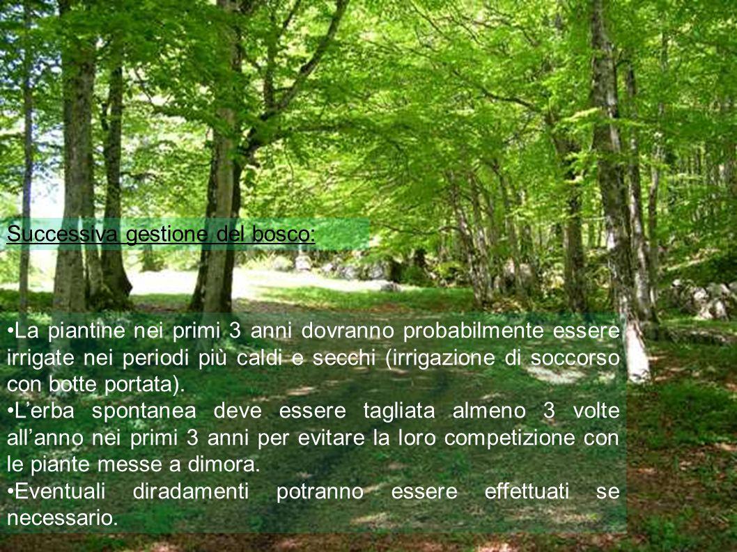 Successiva gestione del bosco: