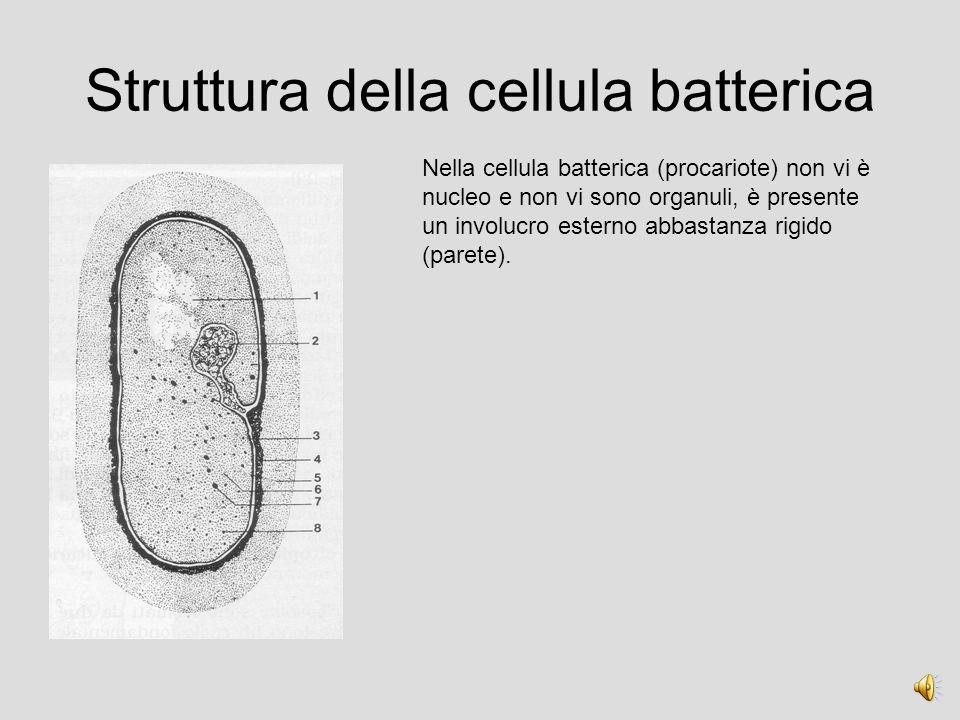 Struttura della cellula batterica