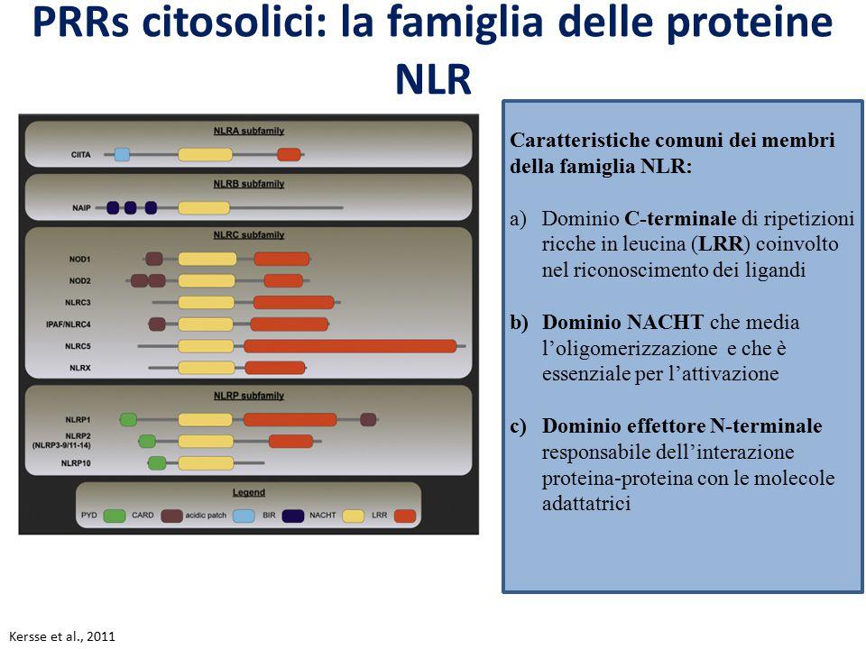 PRRs citosolici: la famiglia delle proteine NLR