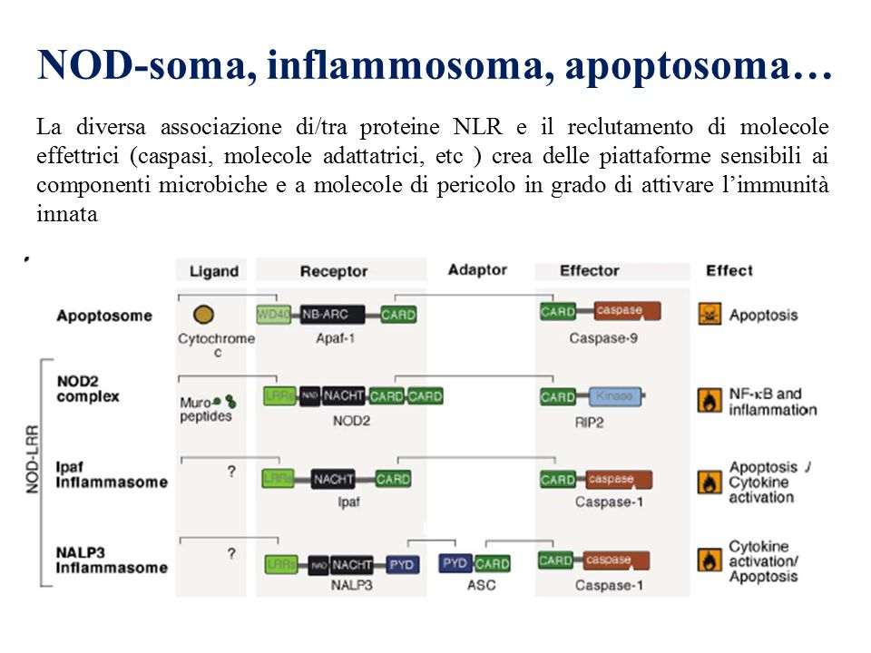 NOD-soma, inflammosoma, apoptosoma…