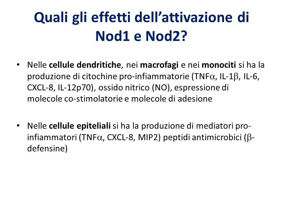 Quali gli effetti dell'attivazione di Nod1 e Nod2