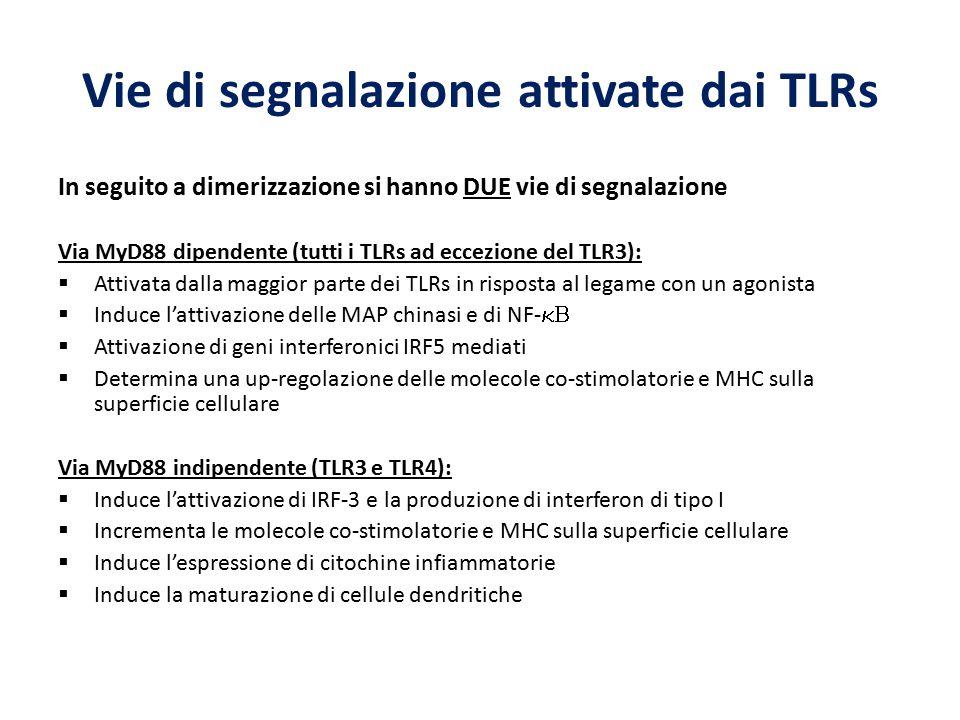 Vie di segnalazione attivate dai TLRs