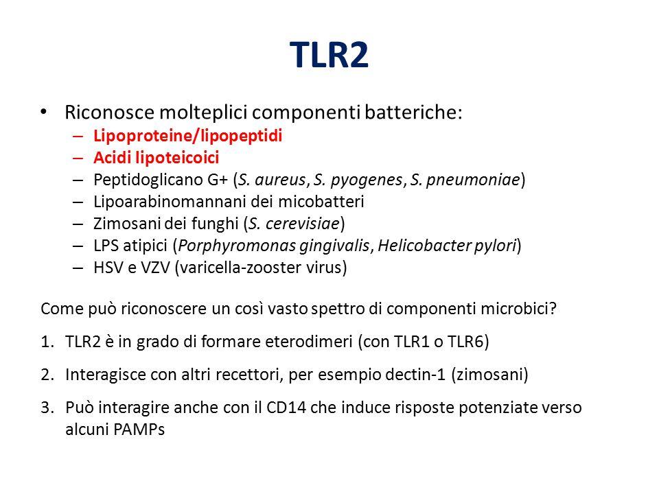 TLR2 Riconosce molteplici componenti batteriche: