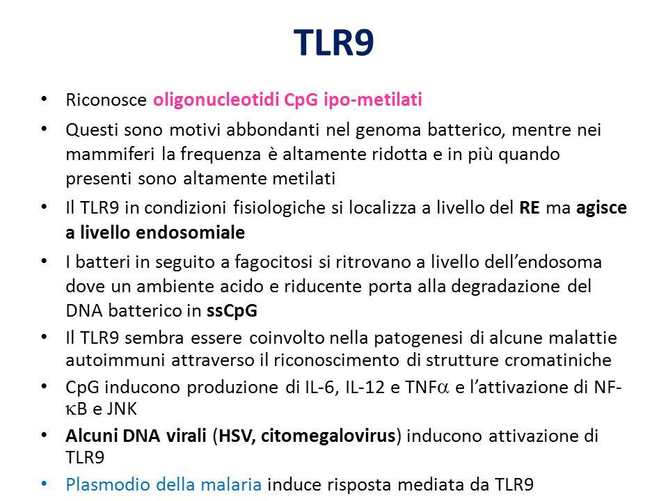 TLR9 Riconosce oligonucleotidi CpG ipo-metilati