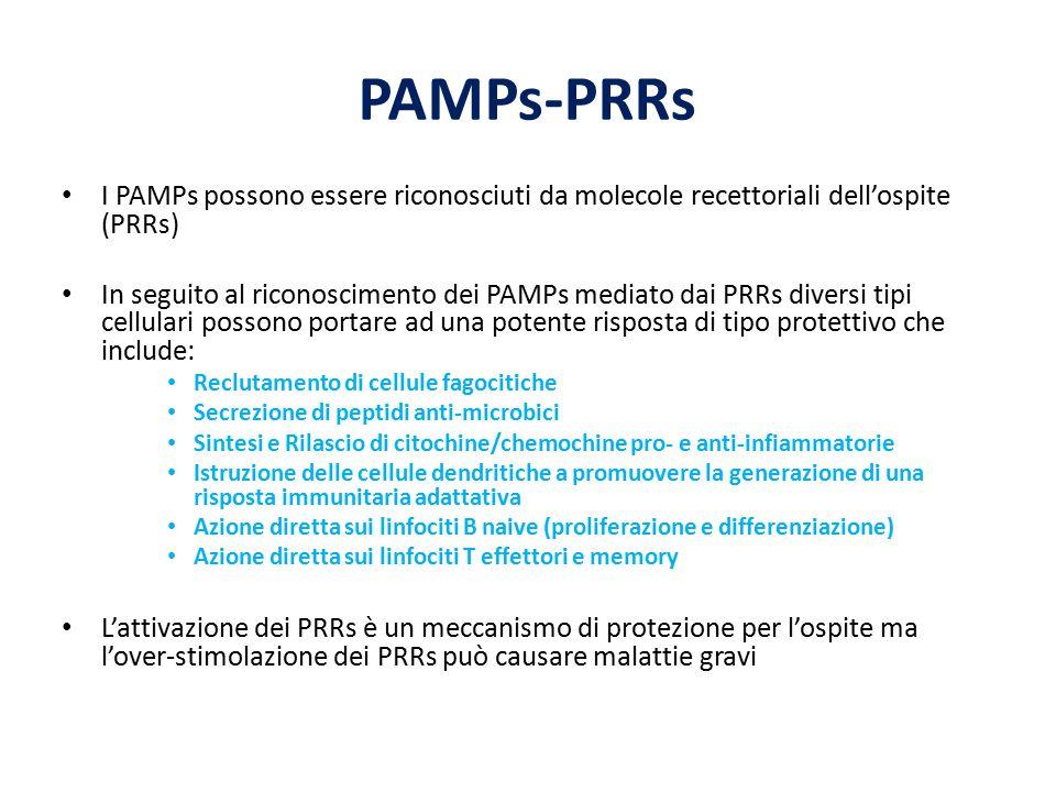 PAMPs-PRRs I PAMPs possono essere riconosciuti da molecole recettoriali dell'ospite (PRRs)
