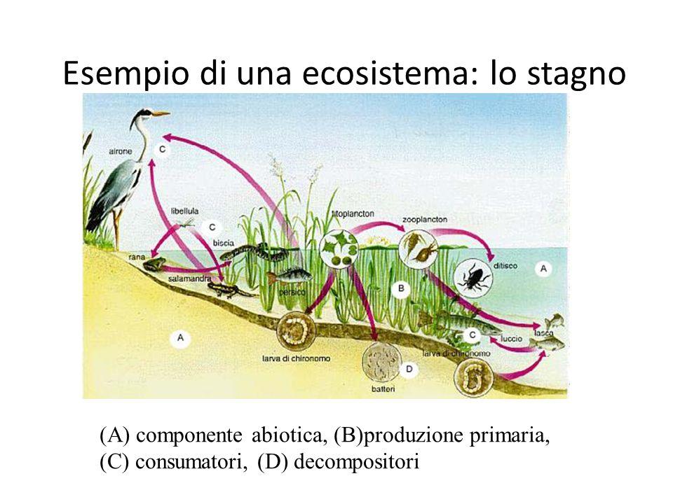 Esempio di una ecosistema: lo stagno