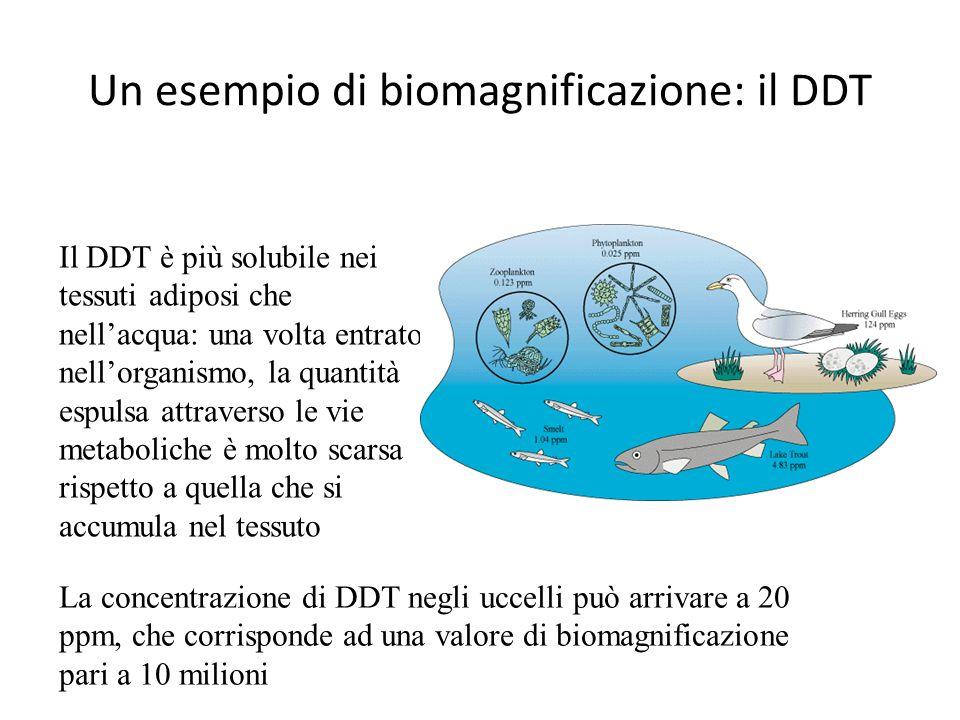 Un esempio di biomagnificazione: il DDT