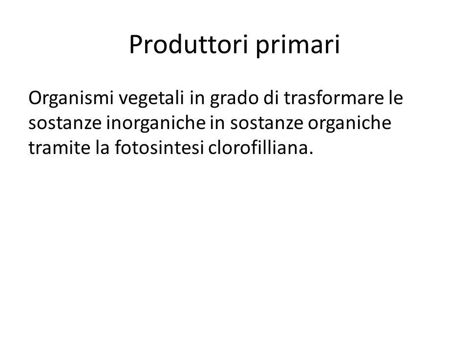 Produttori primari Organismi vegetali in grado di trasformare le sostanze inorganiche in sostanze organiche tramite la fotosintesi clorofilliana.