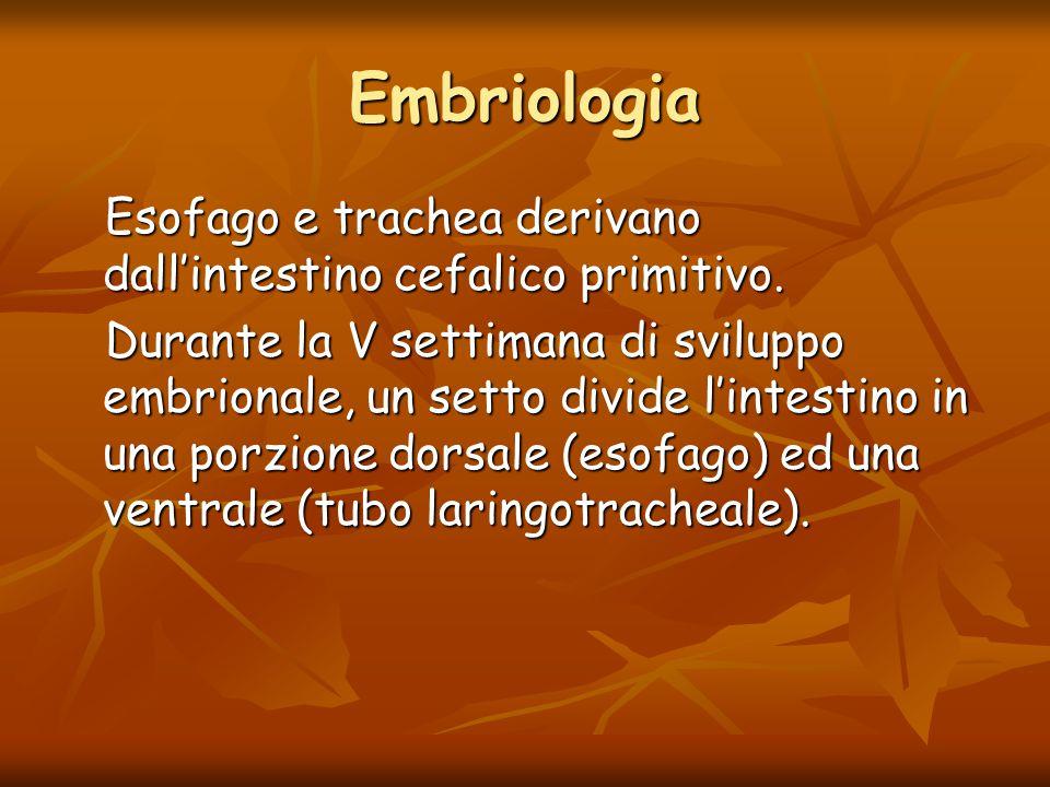 Embriologia Esofago e trachea derivano dall'intestino cefalico primitivo.