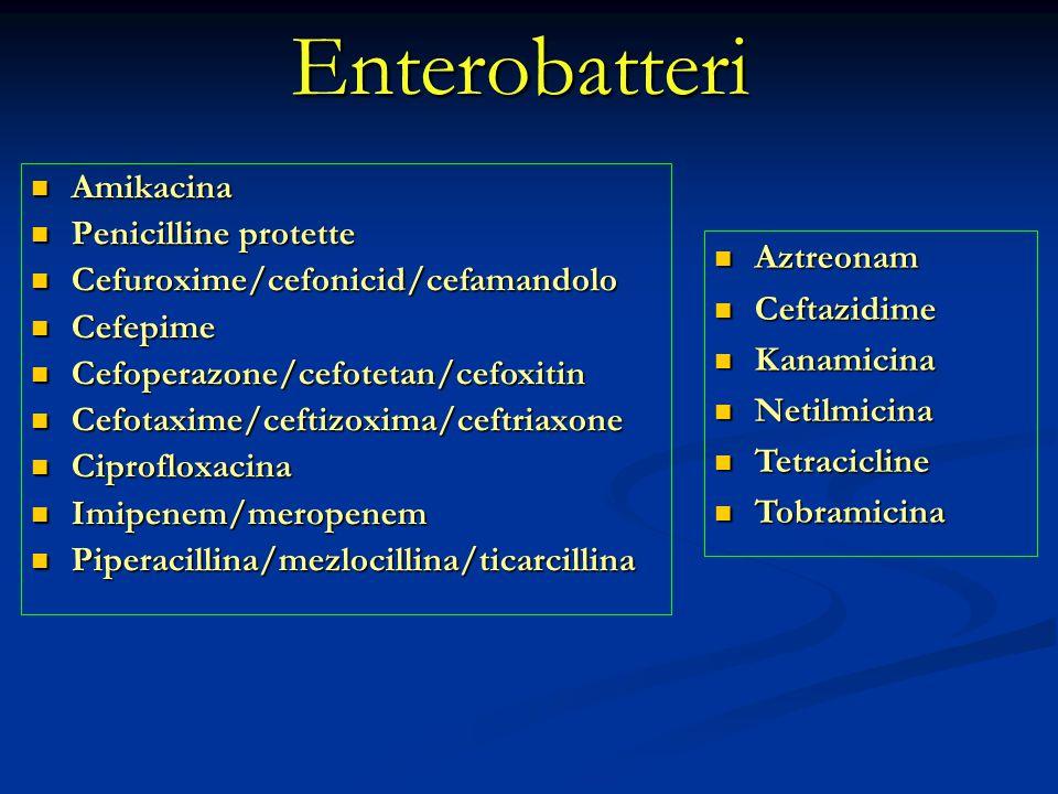 Enterobatteri Amikacina Penicilline protette