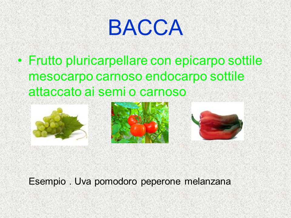 BACCA Frutto pluricarpellare con epicarpo sottile mesocarpo carnoso endocarpo sottile attaccato ai semi o carnoso.