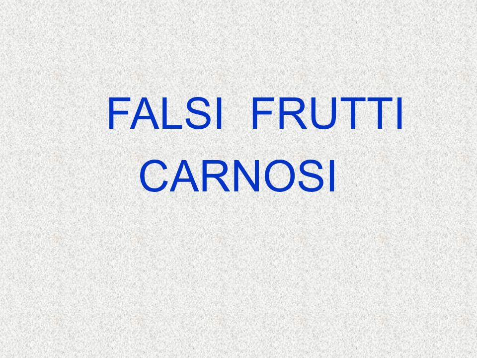 FALSI FRUTTI CARNOSI