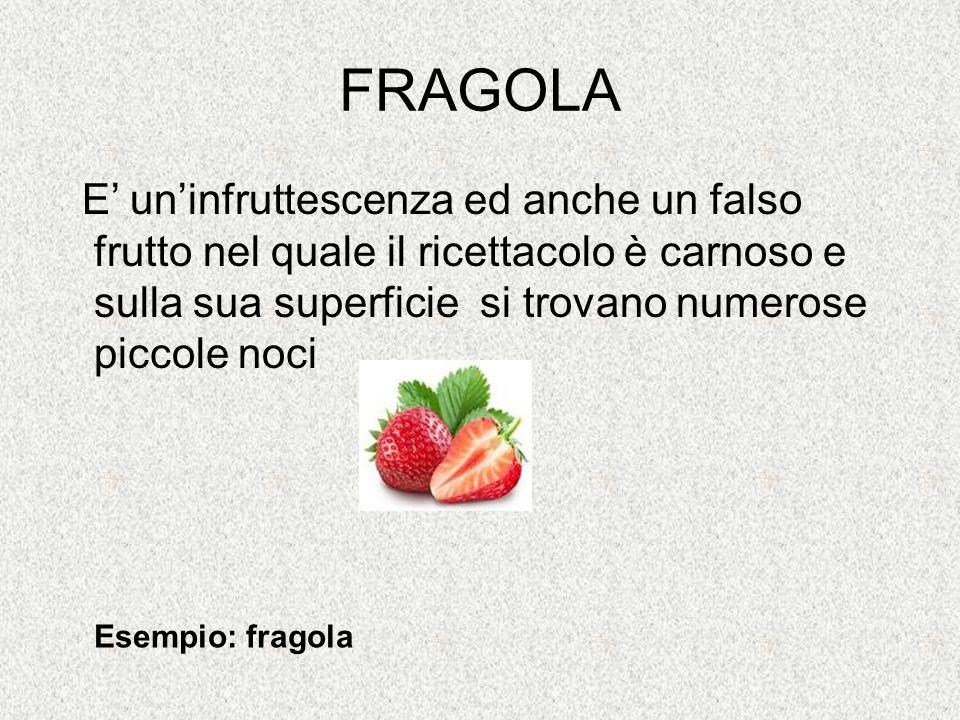 FRAGOLA E' un'infruttescenza ed anche un falso frutto nel quale il ricettacolo è carnoso e sulla sua superficie si trovano numerose piccole noci.