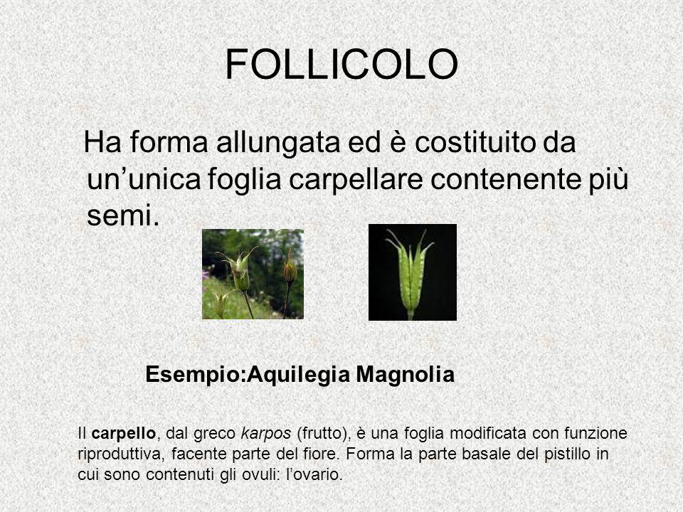 FOLLICOLO Ha forma allungata ed è costituito da un'unica foglia carpellare contenente più semi. Esempio:Aquilegia Magnolia.