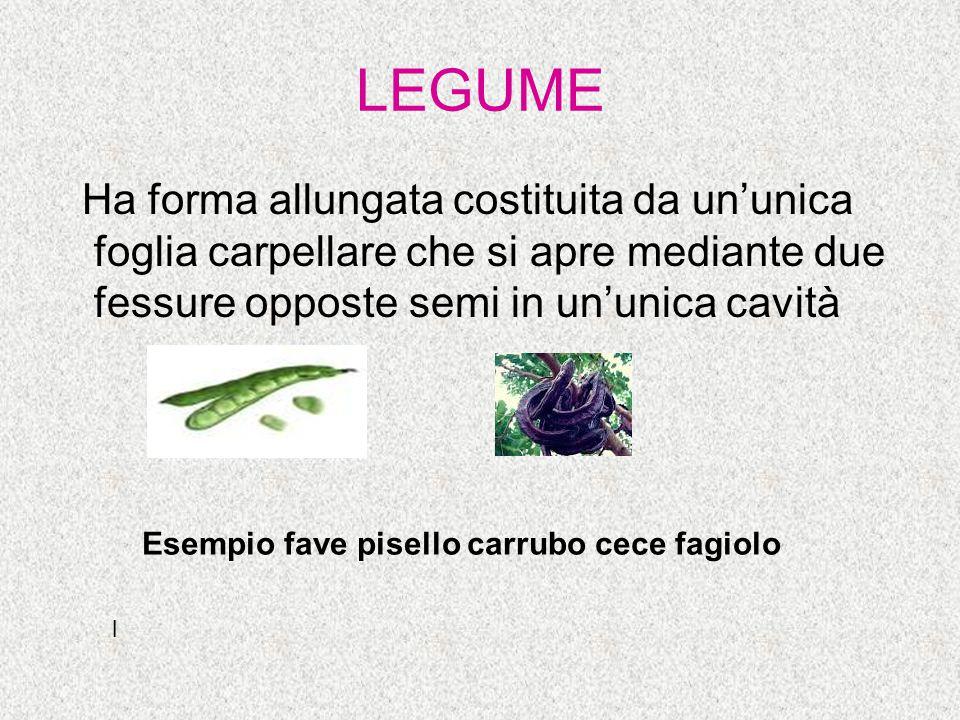 LEGUME Ha forma allungata costituita da un'unica foglia carpellare che si apre mediante due fessure opposte semi in un'unica cavità.