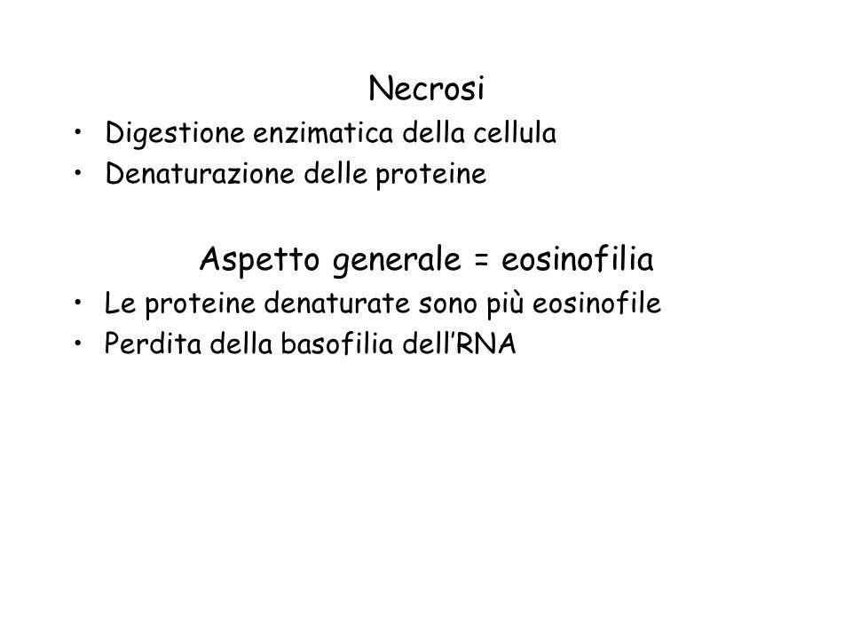 Aspetto generale = eosinofilia