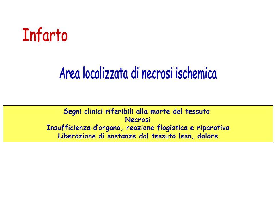 Infarto Area localizzata di necrosi ischemica