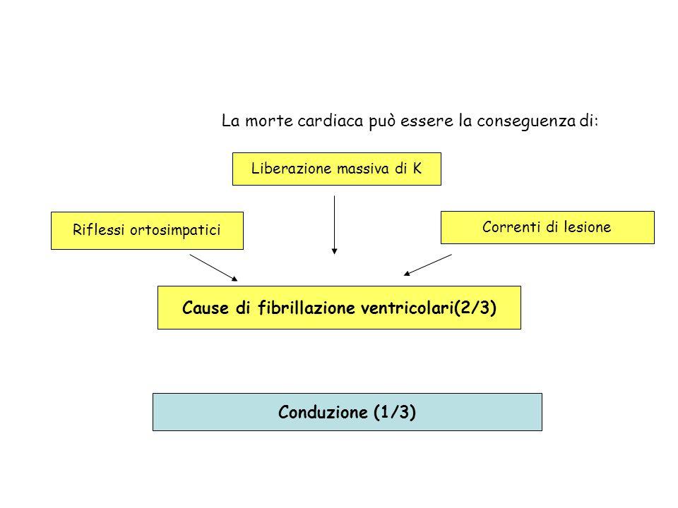 Cause di fibrillazione ventricolari(2/3)