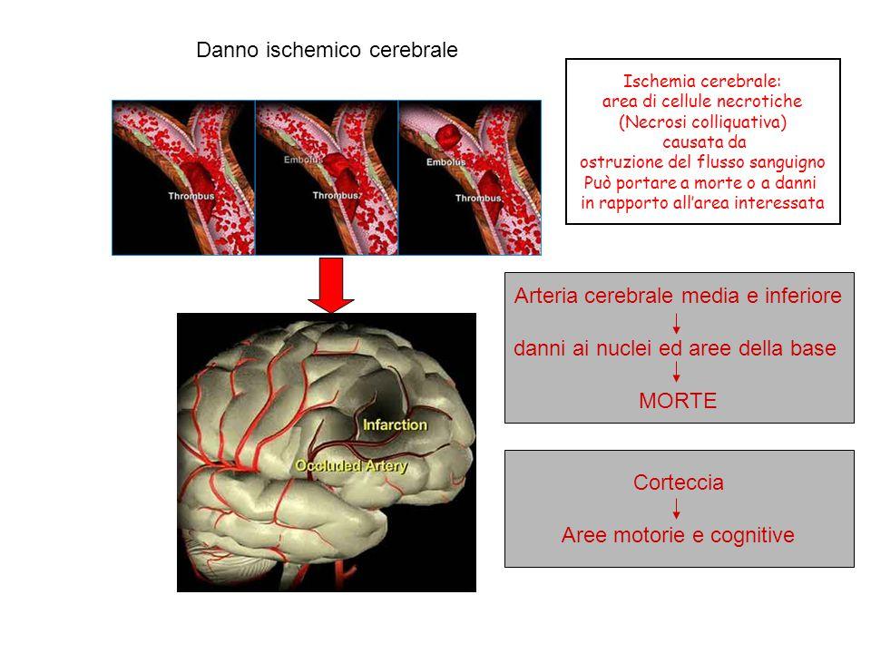 Danno ischemico cerebrale