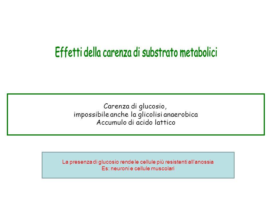 Effetti della carenza di substrato metabolici