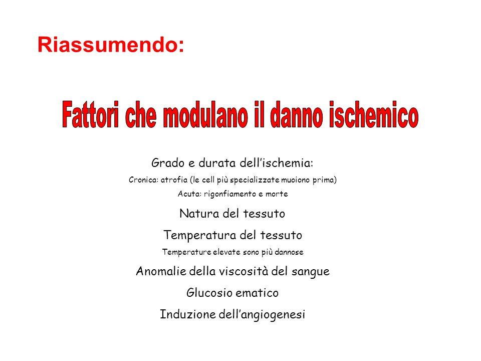 Riassumendo: Fattori che modulano il danno ischemico