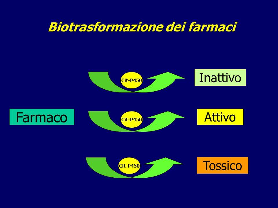 Biotrasformazione dei farmaci