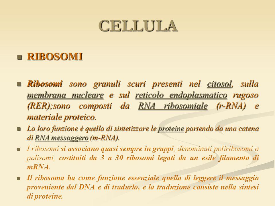 CELLULA RIBOSOMI.