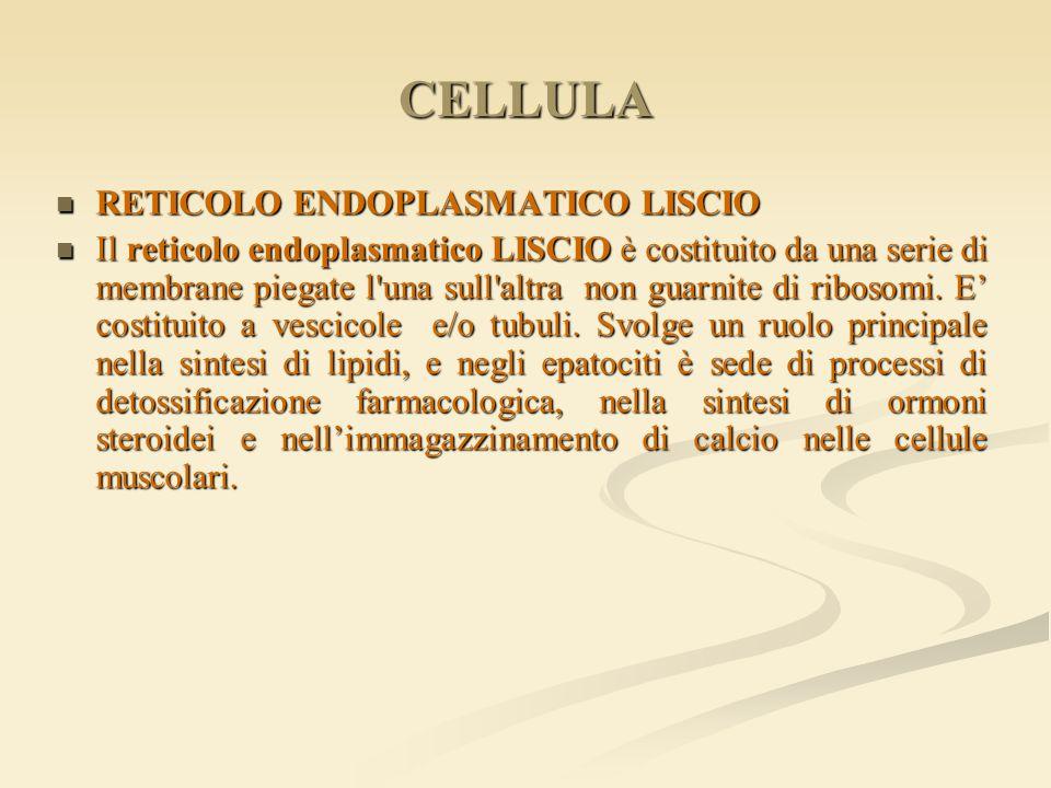 CELLULA RETICOLO ENDOPLASMATICO LISCIO