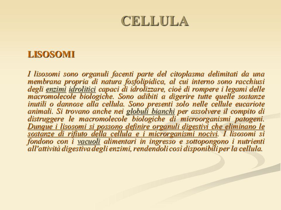 CELLULA LISOSOMI.