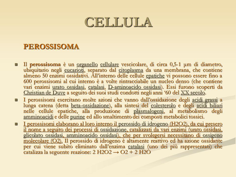 CELLULA PEROSSISOMA.