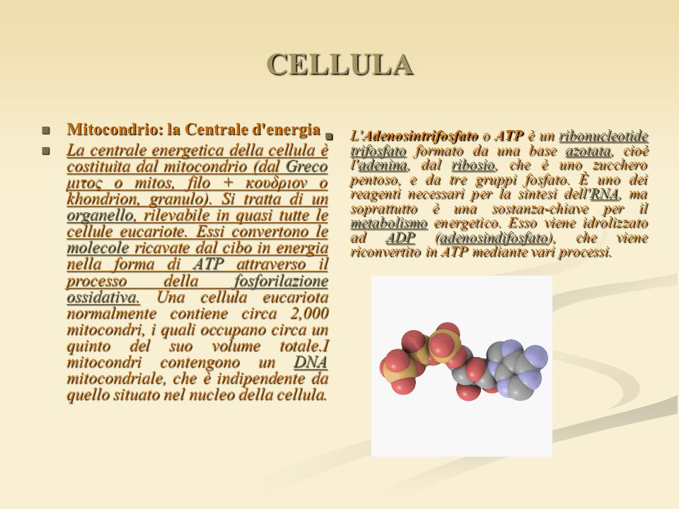 CELLULA Mitocondrio: la Centrale d energia