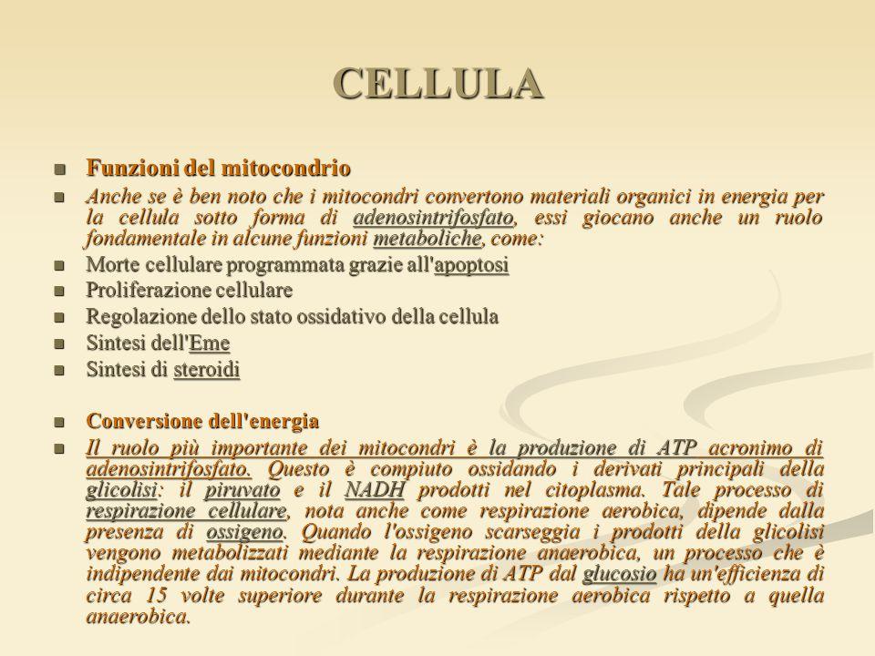 CELLULA Funzioni del mitocondrio