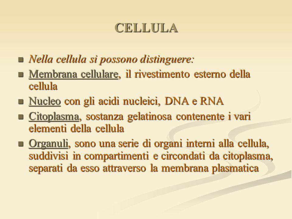 CELLULA Nella cellula si possono distinguere: