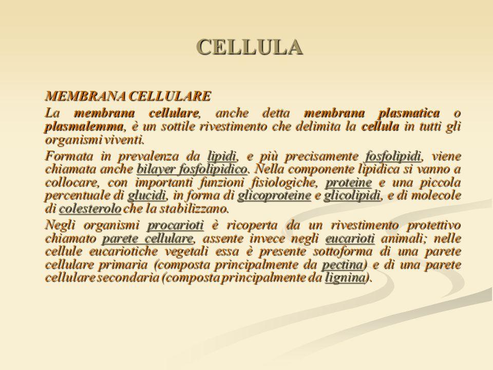 CELLULA MEMBRANA CELLULARE