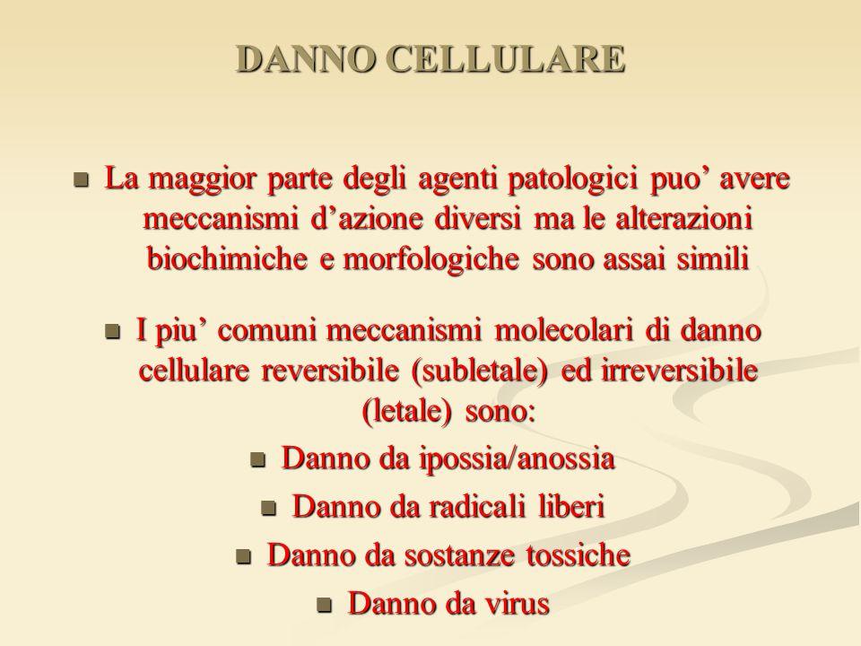 DANNO CELLULARE