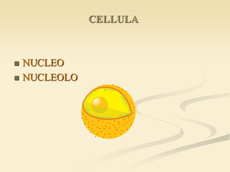 CELLULA NUCLEO NUCLEOLO