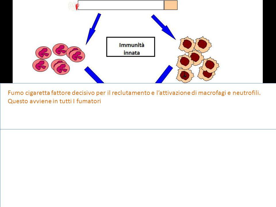 Fumo cigaretta fattore decisivo per il reclutamento e l'attivazione di macrofagi e neutrofili.