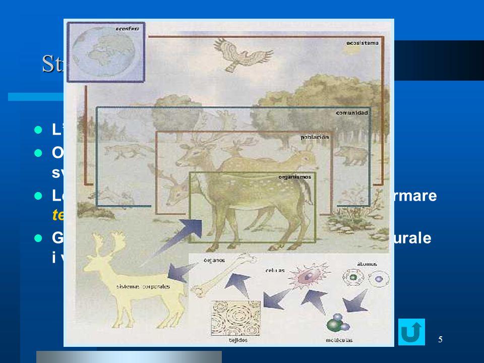 Strutture complesse e organizzate