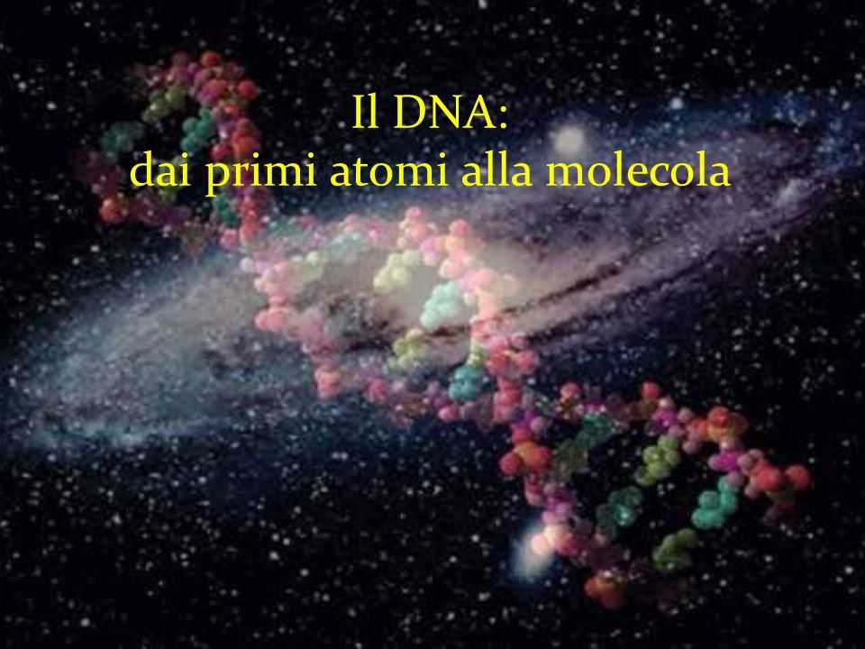 Il DNA: dai primi atomi alla molecola