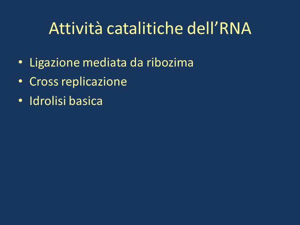 Attività catalitiche dell'RNA