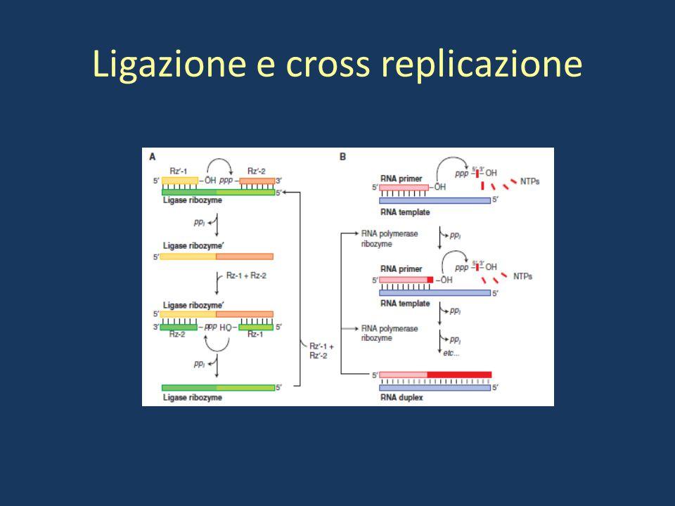 Ligazione e cross replicazione