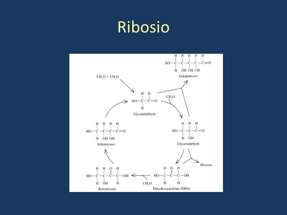 Ribosio