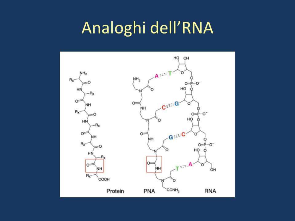 Analoghi dell'RNA