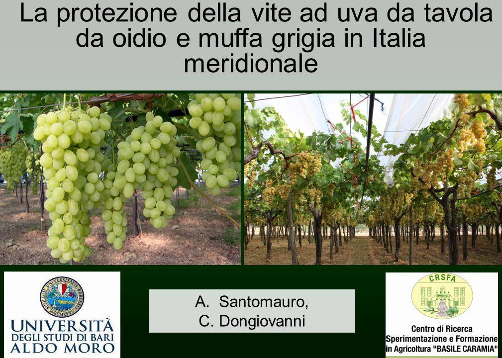La protezione della vite ad uva da tavola da oidio e muffa grigia in Italia meridionale