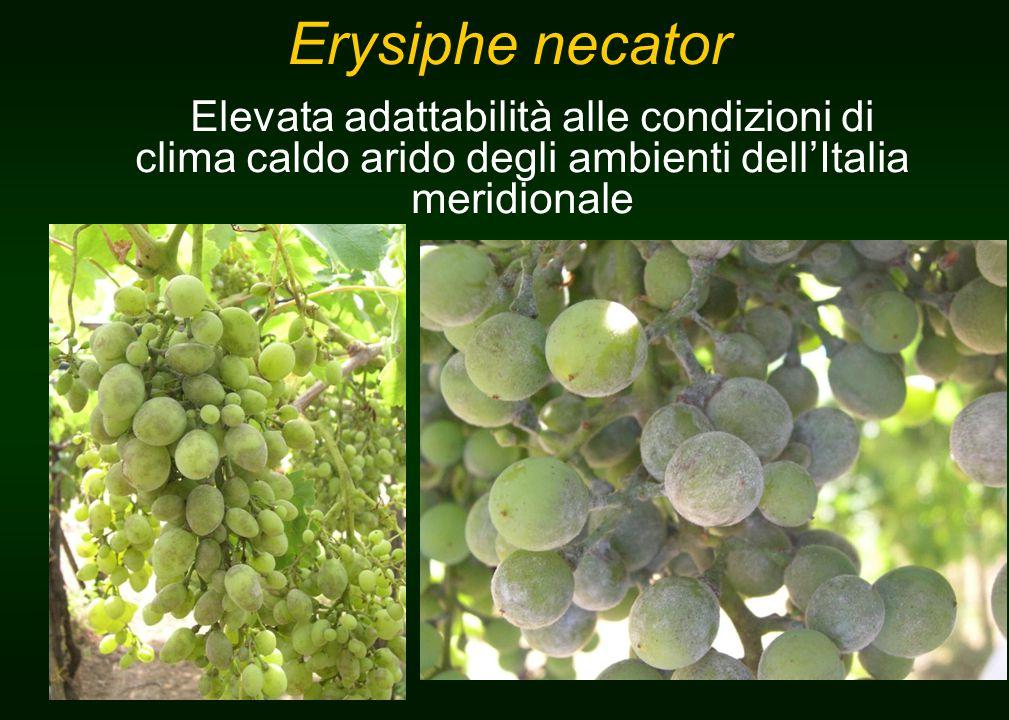 Erysiphe necator Elevata adattabilità alle condizioni di clima caldo arido degli ambienti dell'Italia meridionale.