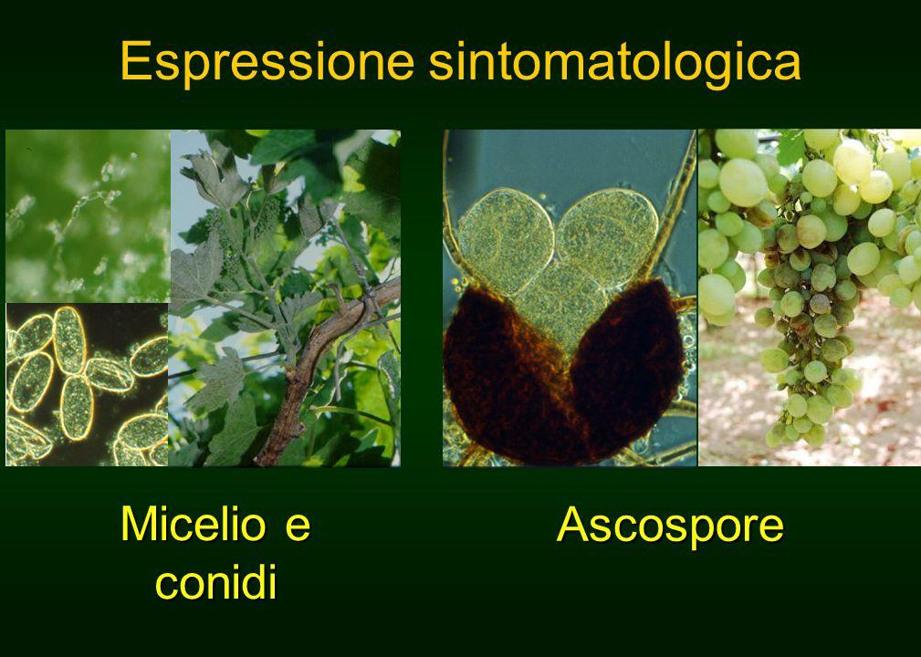 Espressione sintomatologica